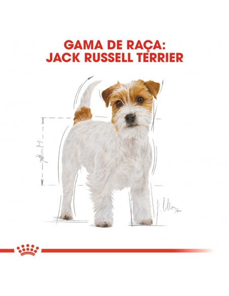 Royal Canin BHN Jack Russell Terrier Adult Alimento Seco Cão
