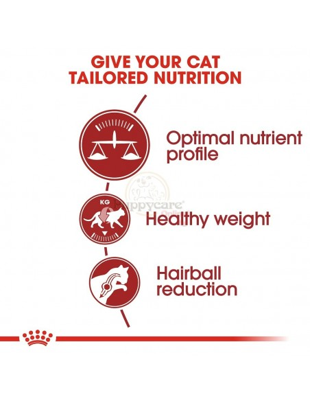 Royal Canin FHN Fit Alimento Seco Gato
