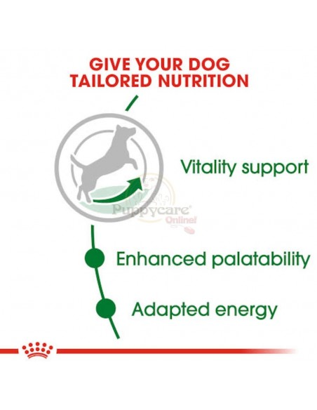 Royal Canin SHN Mini Adult 8+ Alimento Seco Cão