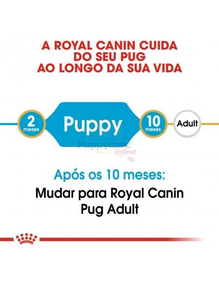 Royal Canin BHN Pug Puppy Alimento Seco Cão